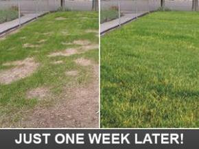 how a lawn will look like after we've made a few adjustements